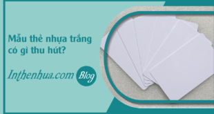 faq-mau-the-nhua-trang-co-gi-thu-hut